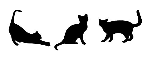 黒猫三兄弟