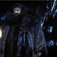 ハグリッドの悲しい過去とは 心優しき森の番人を徹底解説【ハリー・ポッター】