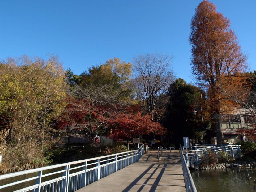 吉祥寺 井之頭公園