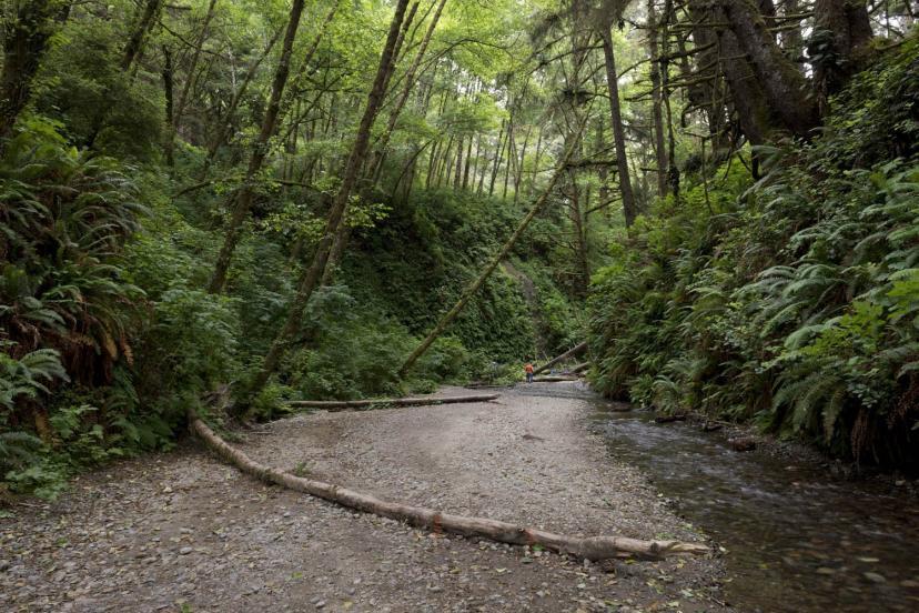 プレイリー・クリーク・レッドウッズ州立公園『ロスト・ワールド/ジュラシック・パーク』