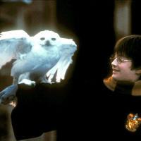 「ハリーポッター」シリーズの意外な事実・トリビア38選!魔法界の裏話をこっそり教えます