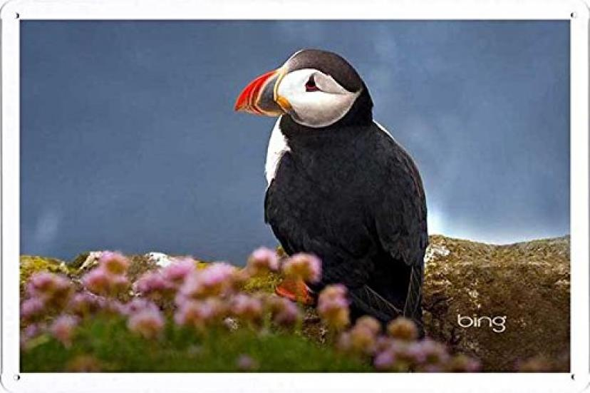 海鳥ニシツノメドリのティンサイン 金属看板 ポスター / Tin Sign Metal Poster of Seabird Atlantic Puffin