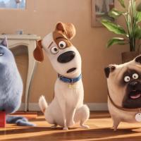 映画『ペット』のあらすじ・キャラ吹き替え声優一覧!キュートな動物が魅力の本作はどう評価された?