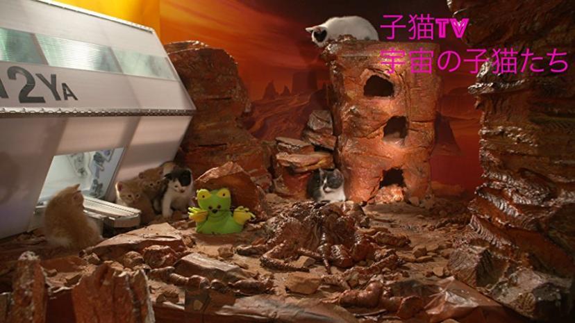 ビデオクリップ: 子猫TV 宇宙の子猫たち