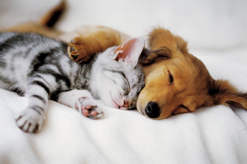 猫と犬(「動物の魅力が堪能できる映画9選」)