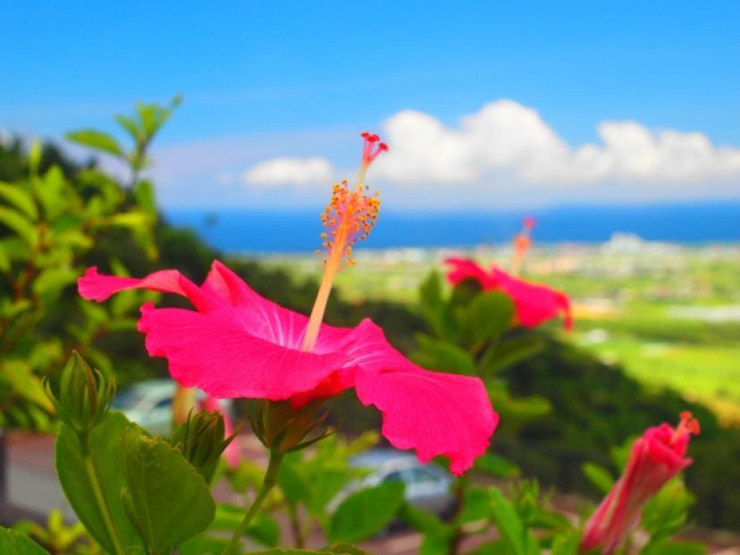 フリー画像、沖縄、石垣島、ハイビスカス、花、夏