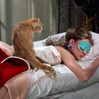 ペット飼いたくない?動物の魅力を堪能できる映画9選【飼い方ガイド付き】