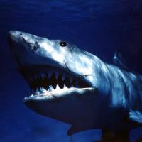 おすすめサメ映画16選 往年の名作からB級パニックムービーまで【2020最新版】