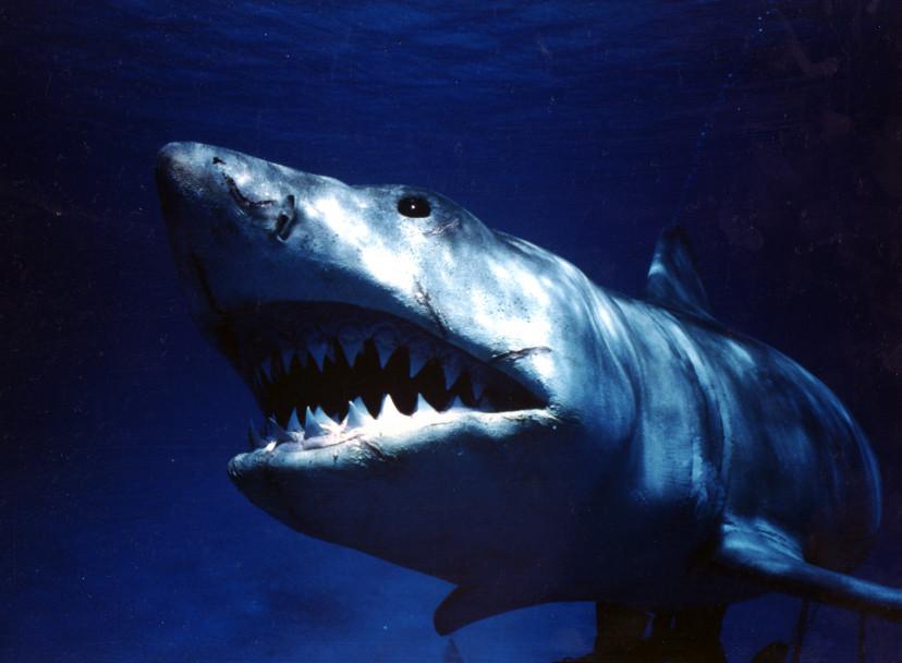 ジョーズ、サメ