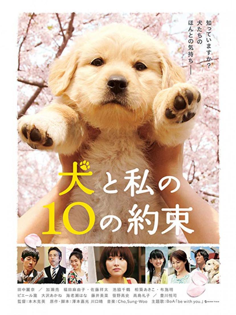 『犬と私の10の約束』