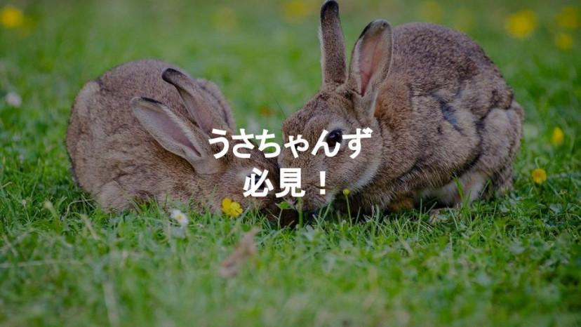 うさぎ アニメ サムネイル