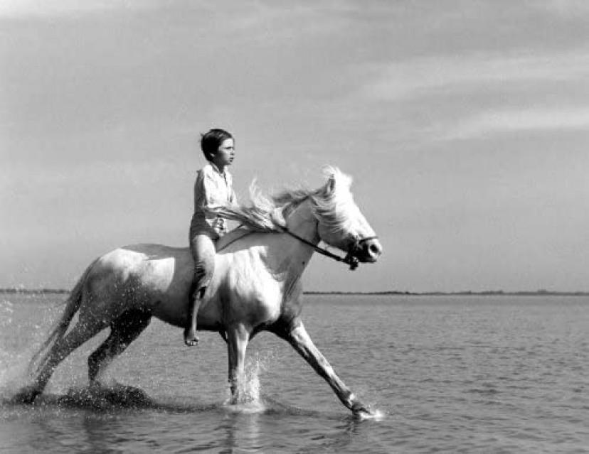 『白い馬』