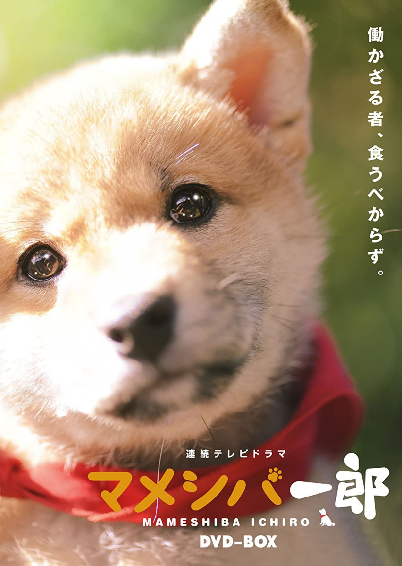 マメシバ一郎、犬ドラマ、佐藤二朗