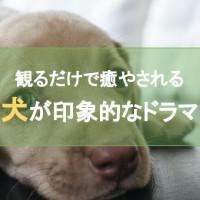 犬が印象的なおすすめドラマ9選 観るだけで癒やされる愛犬との感動ストーリー