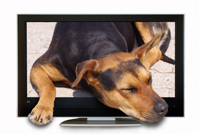 テレビ、犬、フリー素材