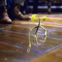 「ファンタビ」に出てくる枝・ボウトラックルがかわいい!小さな相棒の生態が気になる